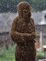 bees-1